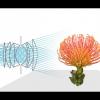 Thumbnail image for Lytro Digital Cameras – The Future of Photography?