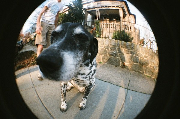 Hello, Mr. Dog
