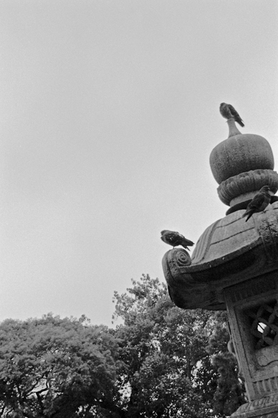 Birds on Pagoda