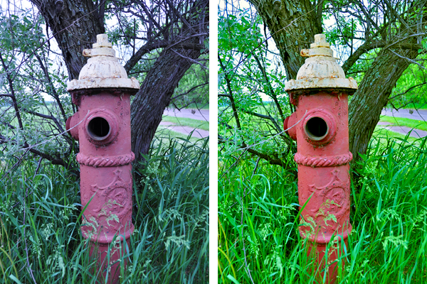 Fire Hydrant Comparison Shot
