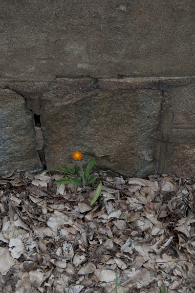 Orange Flower Growing Out of the Street