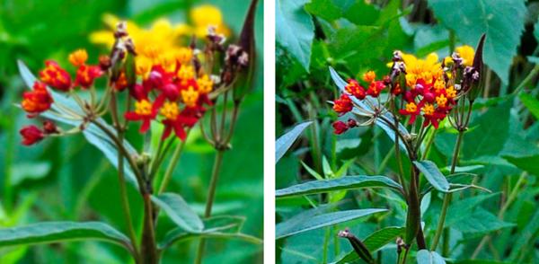 Flower Comparison