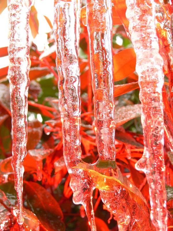 icicle_photos_danmachold