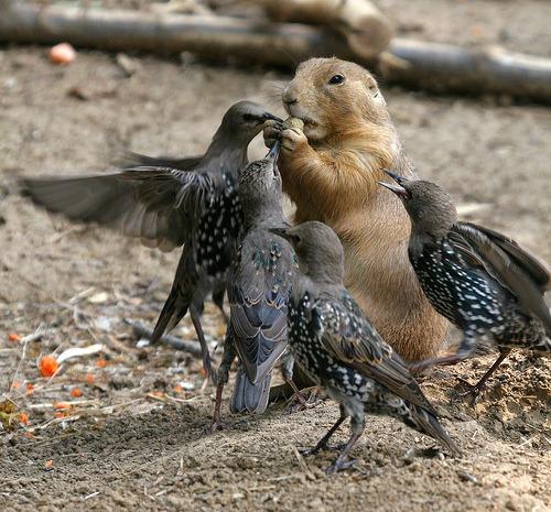 animal_photography_tips_Tad20D