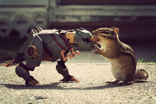 animal_photography_tips_fanboy30