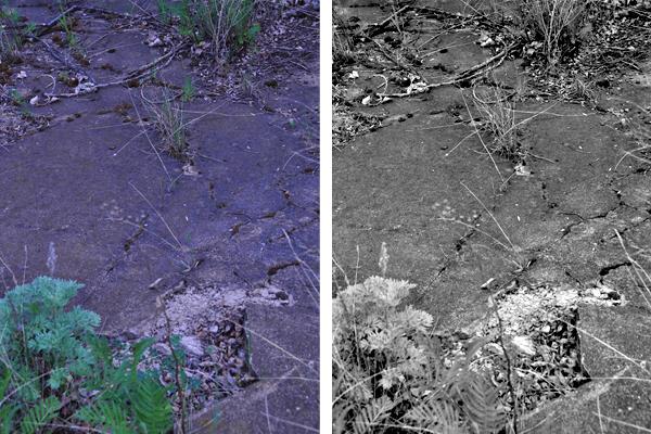 Detail Comparison Shot