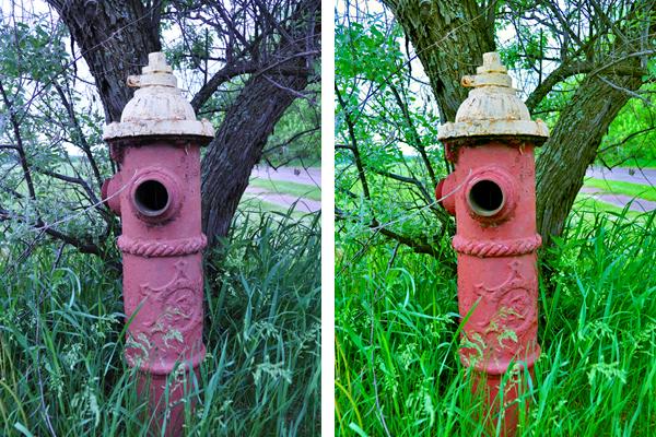 Fire Hydrant Comparison Shot