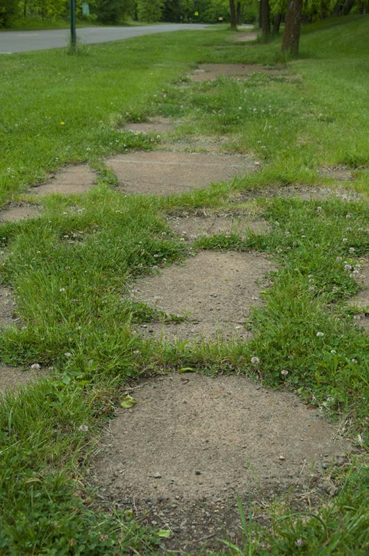 Grass Growing Through the Sidewalk